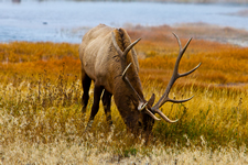 yellowstone_small_1.jpg