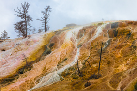 trees-of-yellowstone-skorobogatov-aleksandr_1.jpg