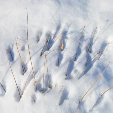 Snow in Sierra Nevada