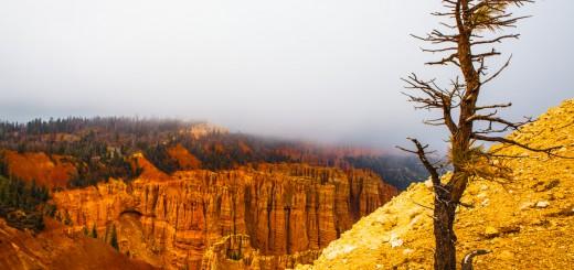 Bryce Canyon Rainbow Point Tree
