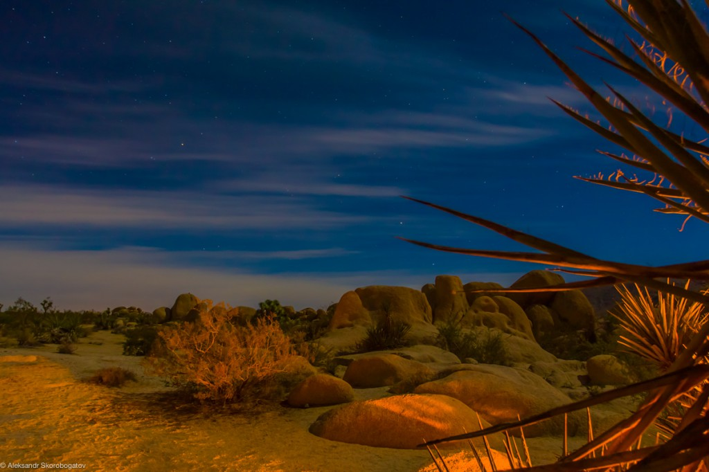 The Great Night Temptation of the Joshua Tree desert